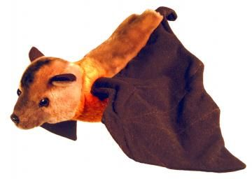 Jett the Flying Fox