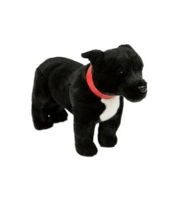 Spike the Black Staffie - Staffordshire Bull Terrier Dog