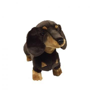 Stretch the Brown Dachshund Dog