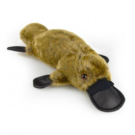 Paul the Platypus  - Australian Made - 37cm